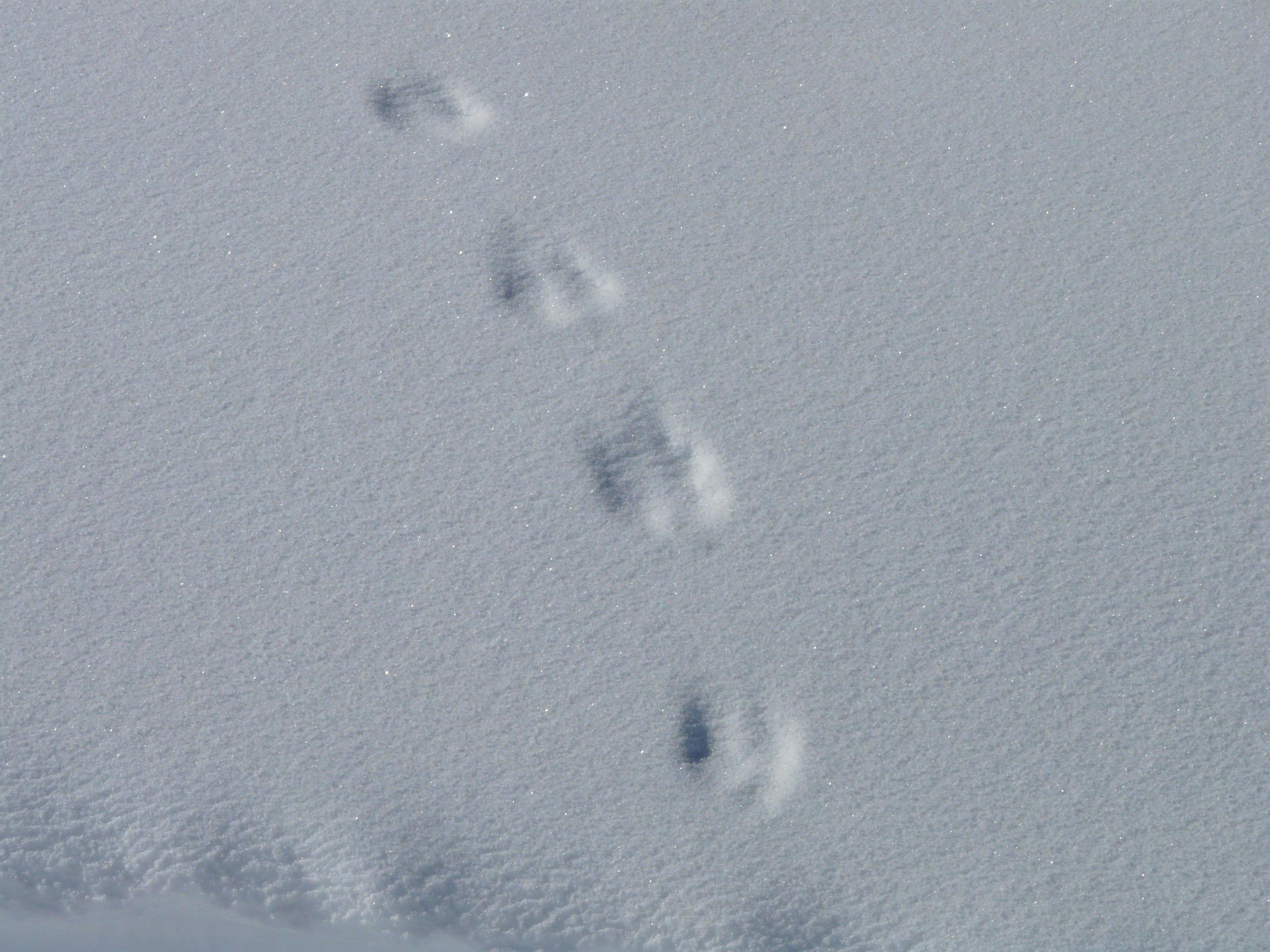 Trace-sur-la-neige